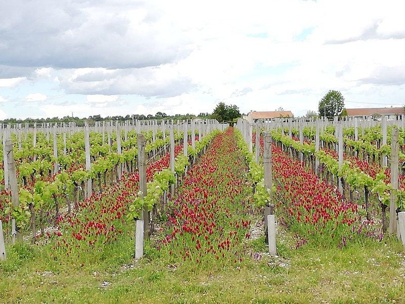 Excursion route des vins Bordeaux Médoc